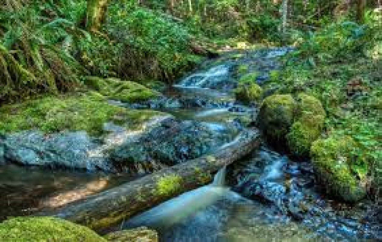 Join the JoCo Dems Environmental Caucus on a Guided Hike up the Beautiful Pipe Fork Creek
