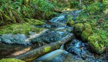 Pipe Fork Creek