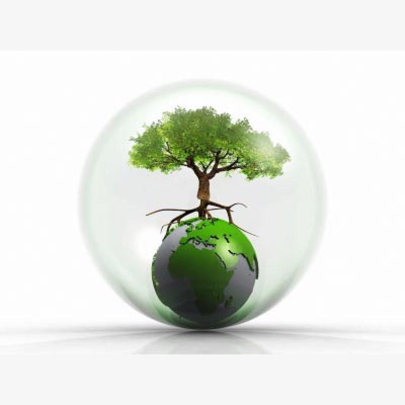 Timber Severance Tax