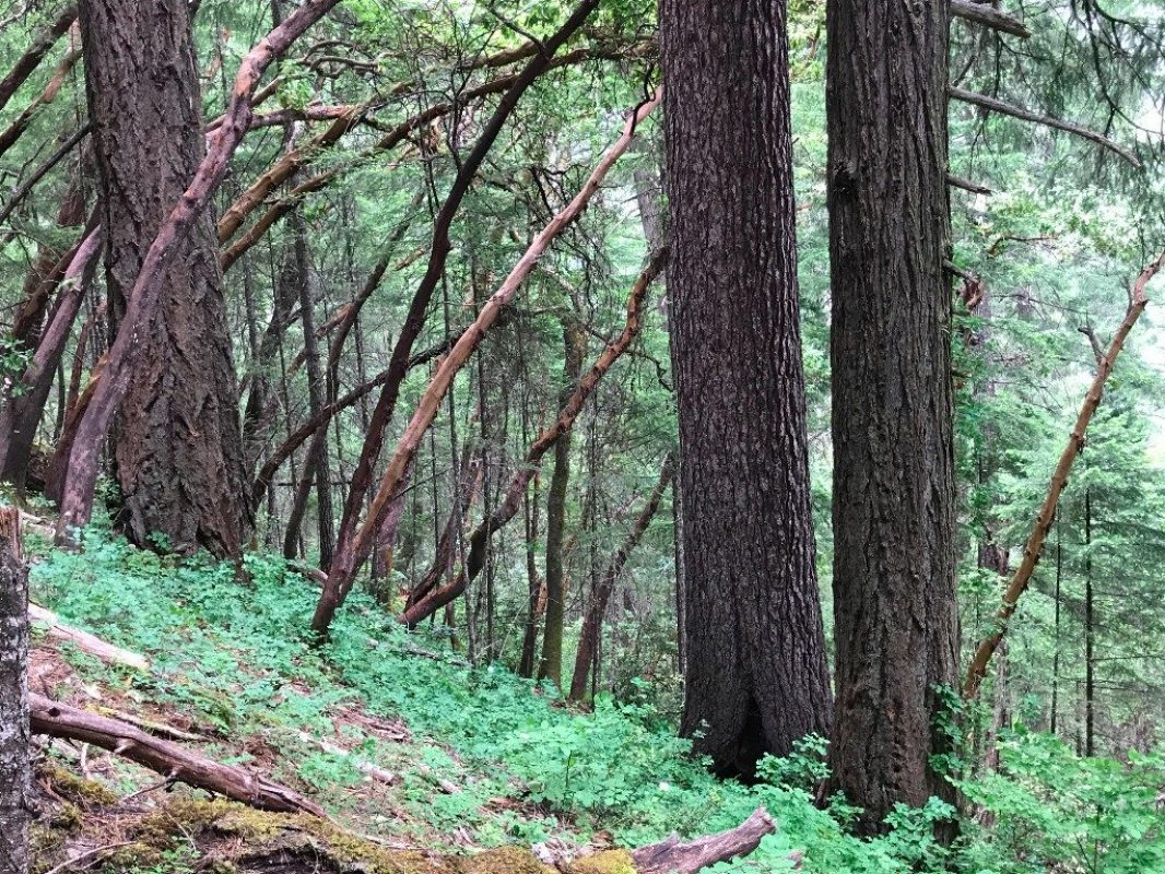 Quick Action Needed — Pickett West Timber Sale