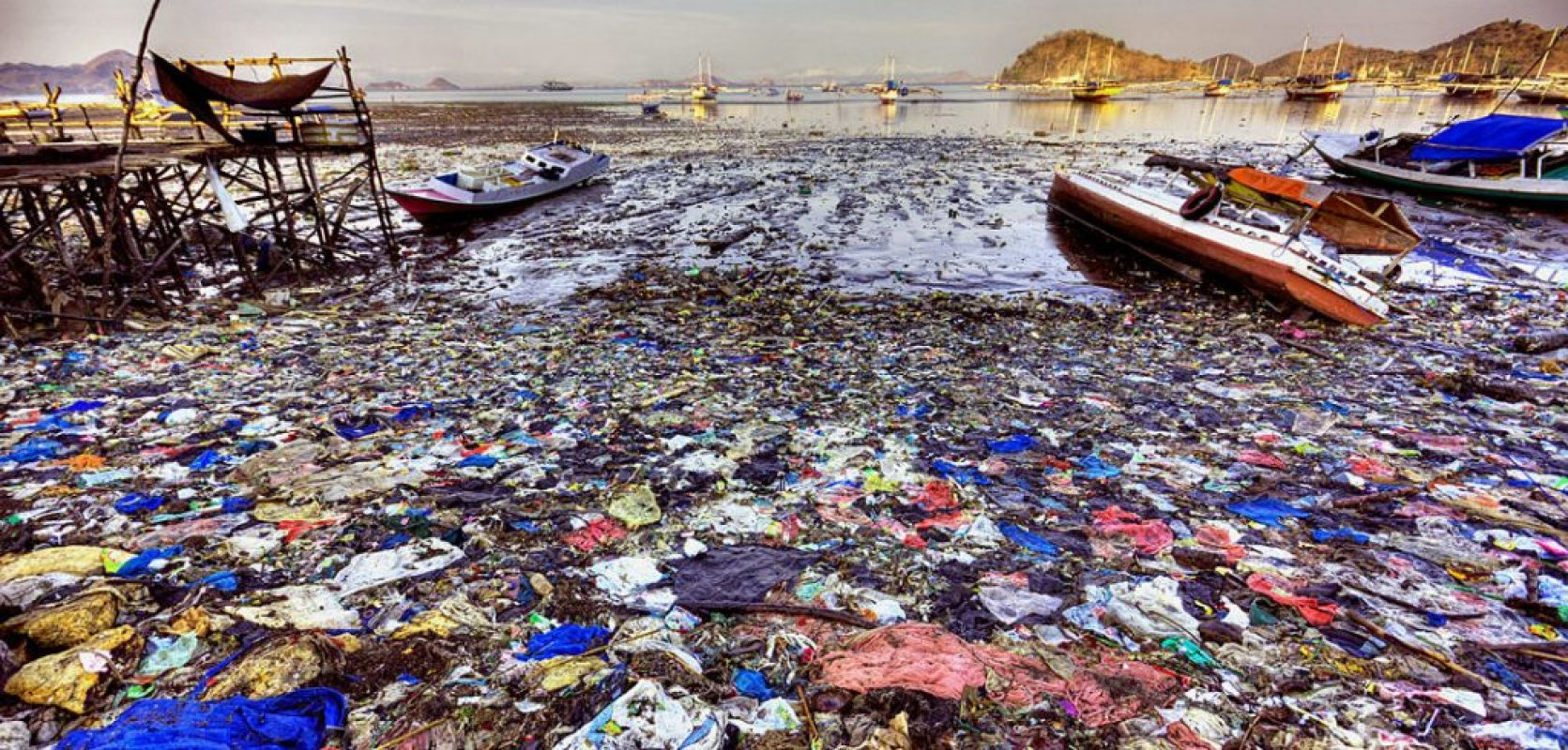 What Can You Do to Reduce Plastic Waste, Improve the Environment, and Save Wildlife from a Horrible Death